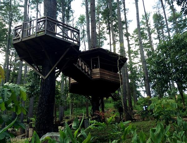 rumah pohon safariku